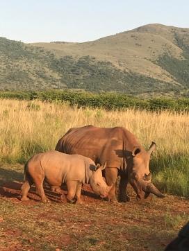mama rhino with baby