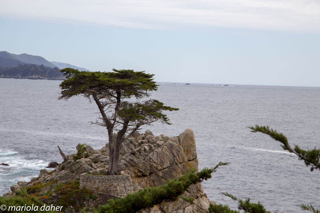 pebble beach-6