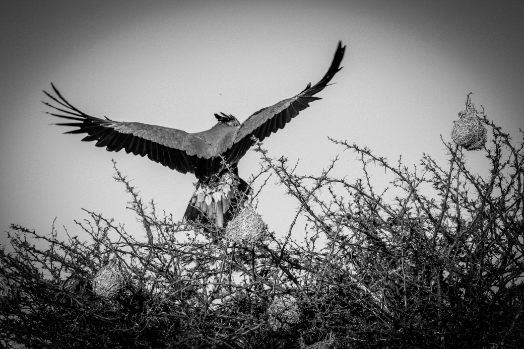 Nkomazi Game Reserve-210