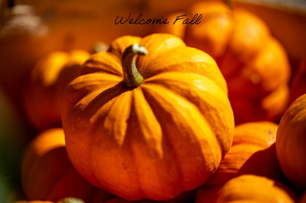 mariola daher _ welcome fall